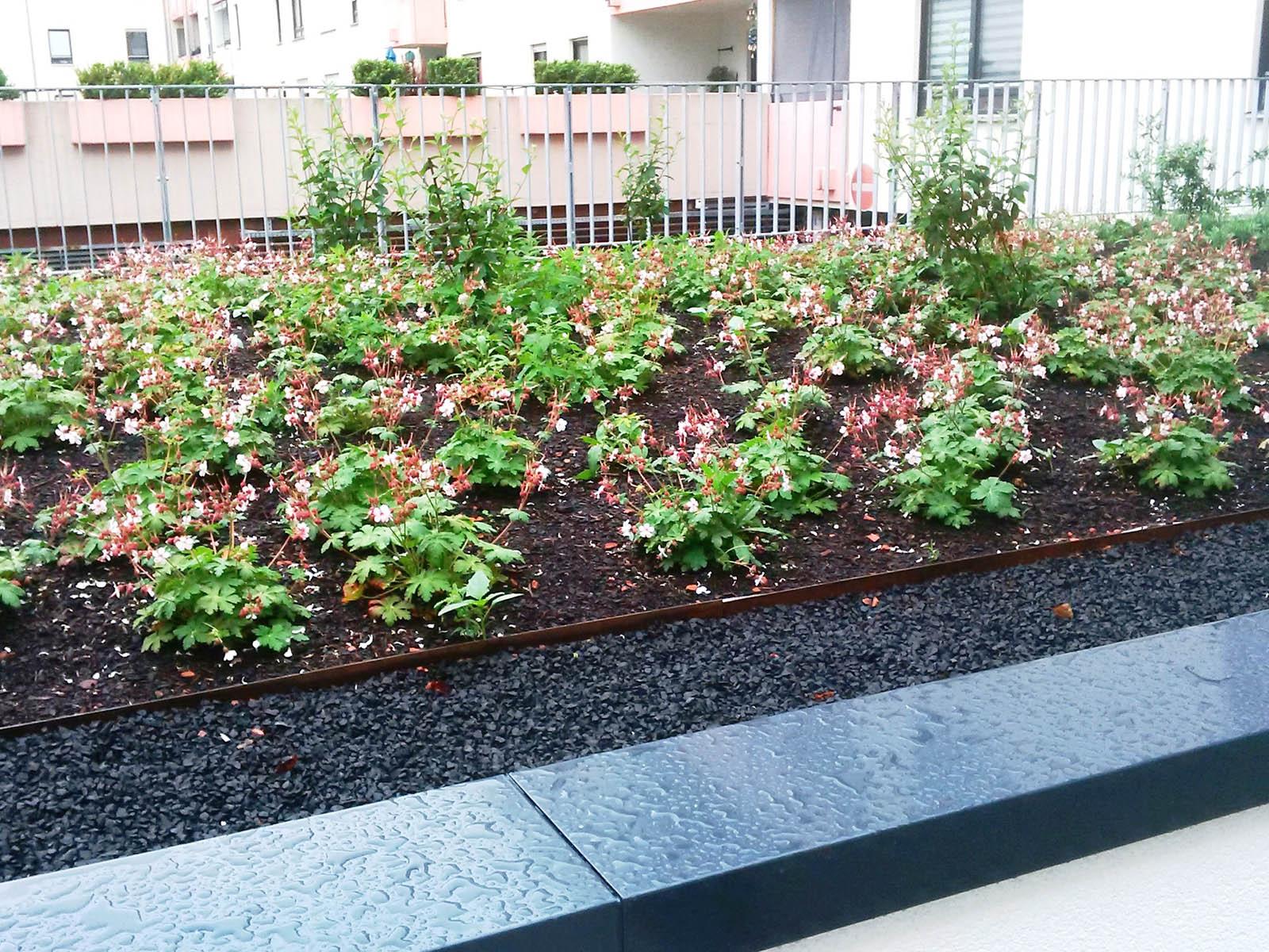 Garten Und Landschaftsbau Mannheim dachbegrünungen weiland grünbau garten und landschaftsbau aus